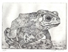 Toad by viana